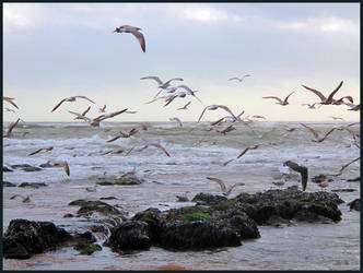 A Scatter of Seagulls by sags