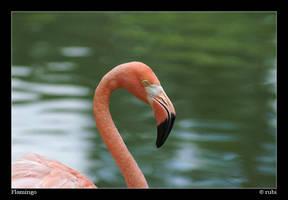 Flamingo by rubi28