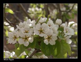 White Apple by rubi28