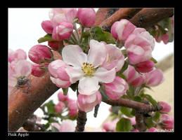 Pink Apple by rubi28
