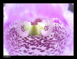 Foxglove by rubi28