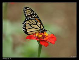 Butterfly II by rubi28