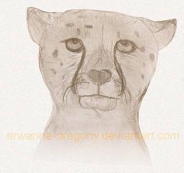 ICDC : Cheetah Doodle by Erwanna-Dragony