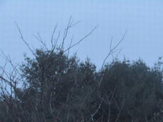 Grey Sky Blues by deviantpringle
