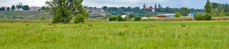 Deer by megaossa