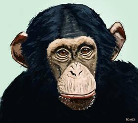 Chimpanzee by Tom-Cii