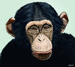 Chimpanzee by Tom-Cii