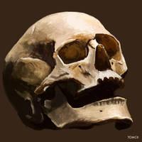 Skull Painting by Tom-Cii