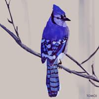 Blue Jay by Tom-Cii
