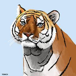 Tiger Portrait by Tom-Cii