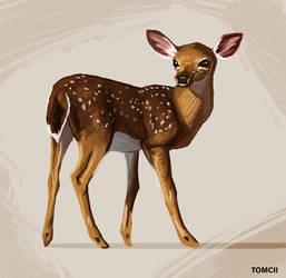 Deer by Tom-Cii