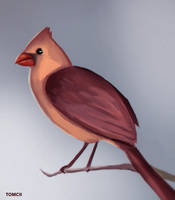 Red Cardinal by Tom-Cii
