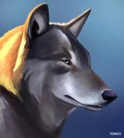 Wolf-Portrait by Tom-Cii