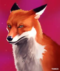 Fox by Tom-Cii
