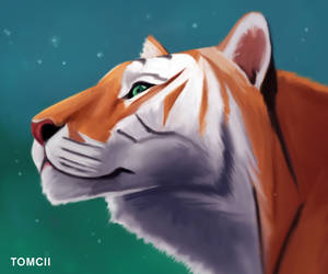 Tiger by Tom-Cii