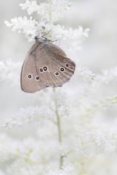 winter butterfly by wolf-minori