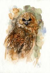 Fishing owl by wolf-minori