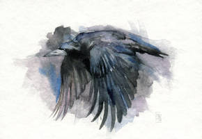 Rook by wolf-minori