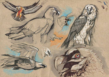 Bearded vulture doodles by wolf-minori