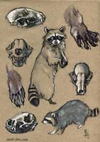 Racoon - 100animals100days by wolf-minori