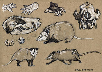 Opossum - 100animals100days by wolf-minori