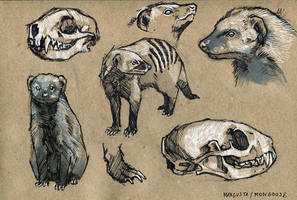 Mongoose - 100animals100days by wolf-minori