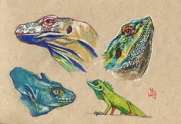 Lizard study by wolf-minori
