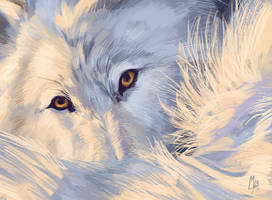 Wolf photostudy I by wolf-minori