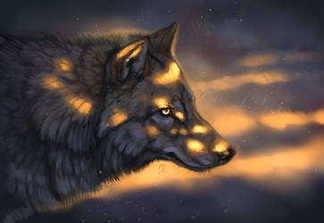 Wilkswiatlo by wolf-minori