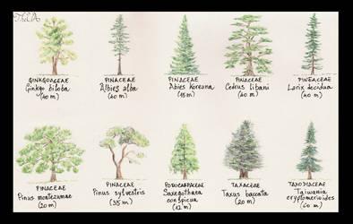 Tree Study - Conifers 2 by TheUnconfidentArtist
