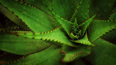 Plant by 5o5