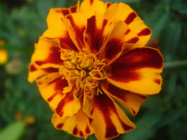 red and yellow 2 by lorylinn-stock
