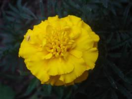 yellow 2 by lorylinn-stock