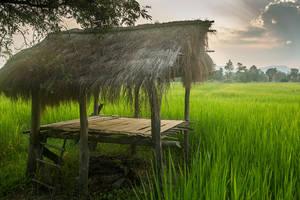 Sticky Rice by jbrum
