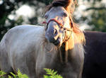 Super Dot 14 by MountainViewStock
