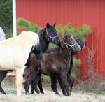 Multiple horses 60 by MountainViewStock