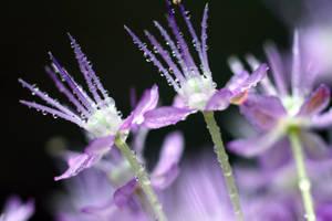 Allium V by Gothic-Dreamscapes