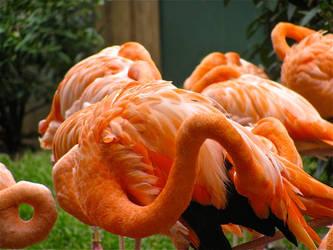 Flamingo by Dracken18