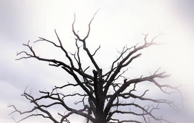 Monstrance by Drageadroth