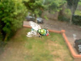 Fly on the Window by corruptedangel
