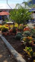 Mini Pumpkins Near State Fair Beer Garden 2016 by blah1200