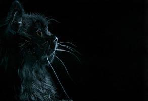 Cat by martakazik