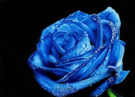 Blue Rose by martakazik