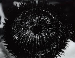 Sea Urchin by WorstRoadtripEVER