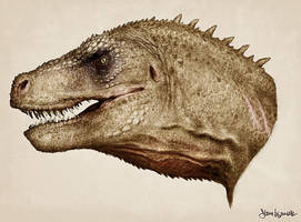Rex Head Study by SBWomack