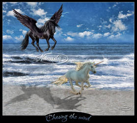 Chasing the Wind by Nameda