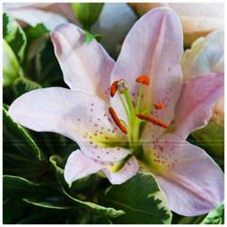 Deliciously fragrant by Nameda