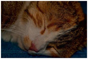Sleepy baby by Nameda