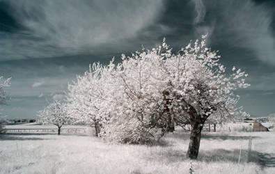 White Summer by SandsteinLicht