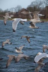 Seagulls in the storm by JoergJohannMueller